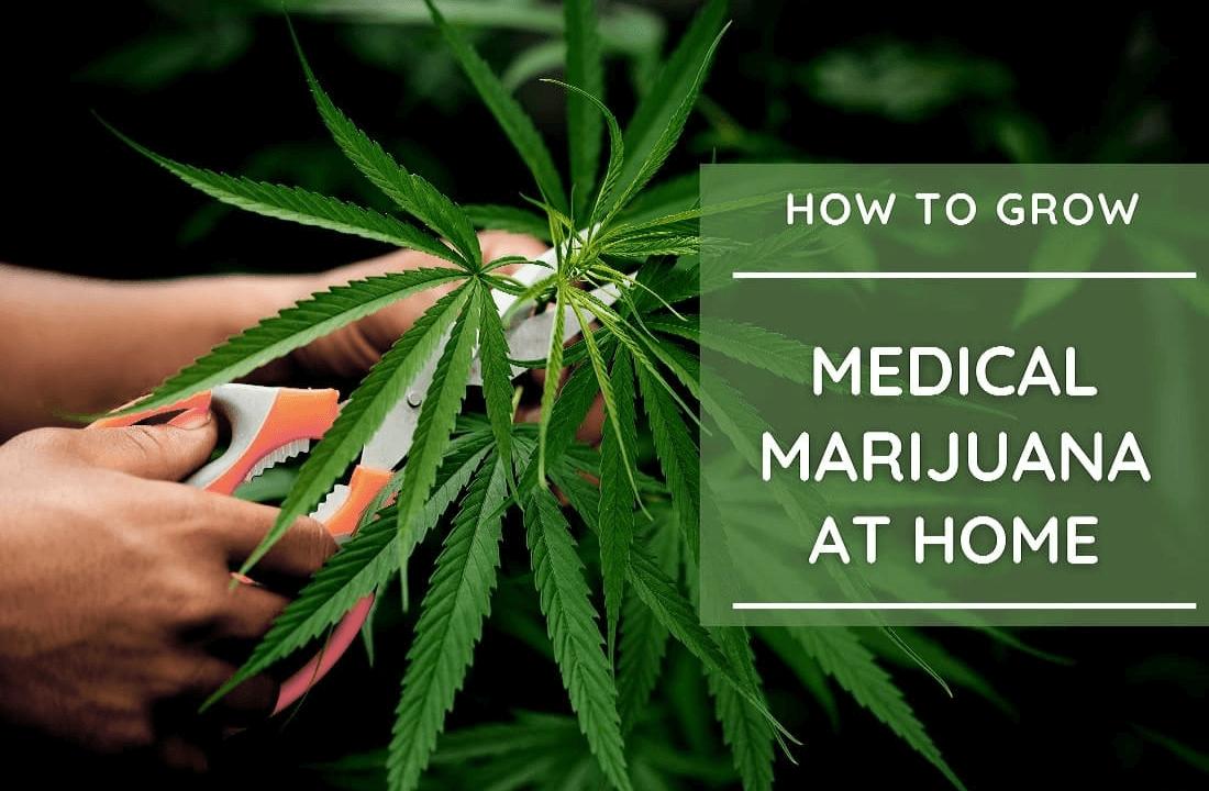 How to Grow Marijuana at Home in Oklahoma?