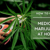 How to Grow Marijuana at Home in Oklahoma