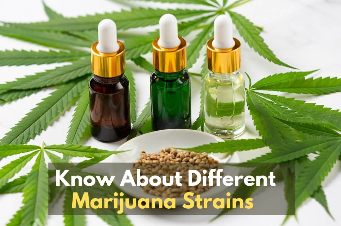 Know About Different Marijuana Strains